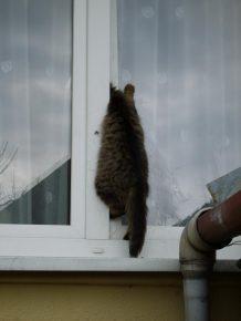 кошка застряла в пластиковом окне