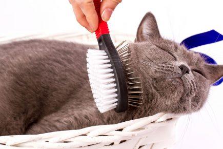 уход за шерстью кота