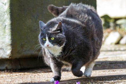 грация кошки ловкость картошки