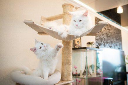 место для кота дома
