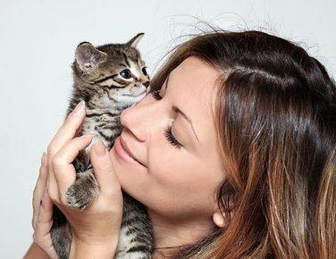 общение с котом