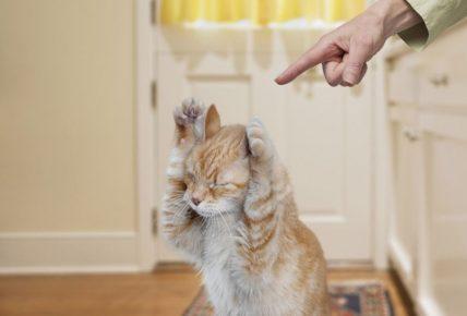 наказывать кошку