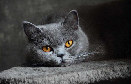 недорогие породы кошек