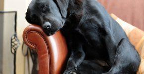 Самые популярные собаки в Москве: фото и названия пород