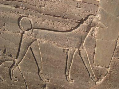 самая первая порода собаки в мире