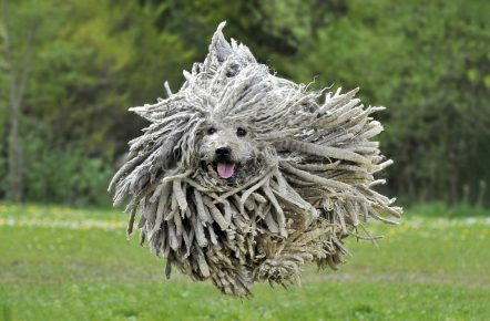 самые забавные породы собак