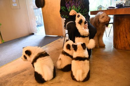 «Панды» в кафе