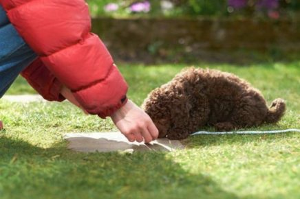 обучение щенка команде лежать