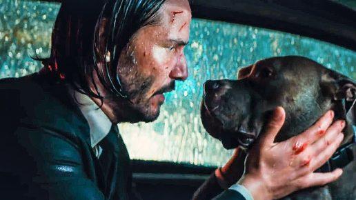 порода собаки из фильма джон уик 2