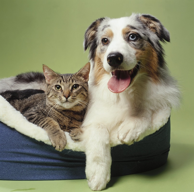 Фото кота и собаки вместе