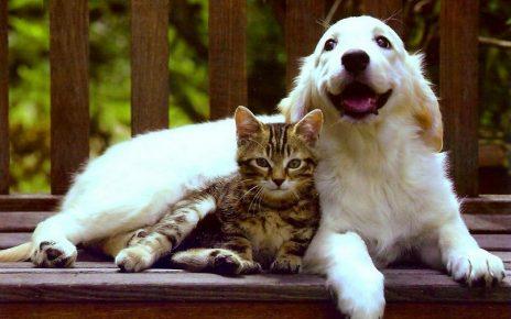 Кот с собакой улыбаются