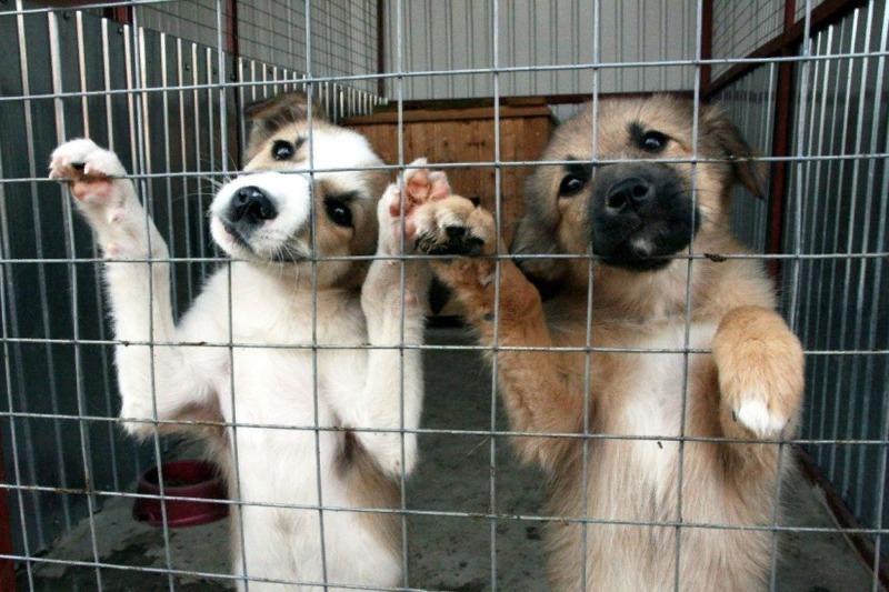 Два щенка жалобно смотрят через решётку вольера