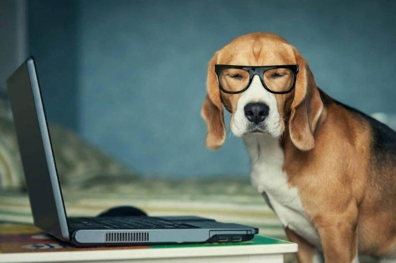 Собака в очках за компьютером