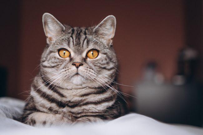 Лакомства для кошек Dreamies