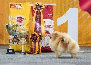 Самые популярные корма для собак 2019 — Педигри: разбор состава и отзывы