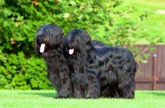 Стафилококк у собак симптомы лечение профилактика  KotPes
