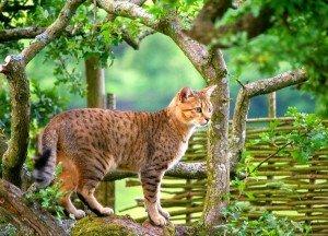 Лишай у кошек и котов Симптомы как лечить фото и видео