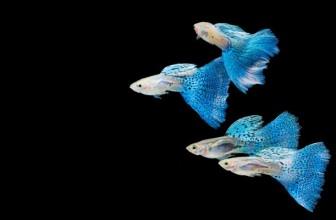 Аквариумные рыбки 205 видов с названиями фото описанием